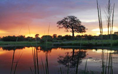 Hwange Sunset Zimbabwe